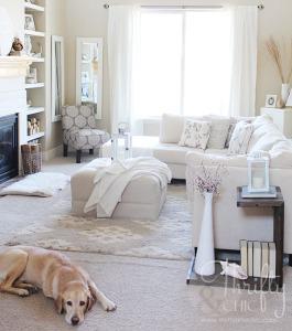 Limpieza alfombra con animales en casa