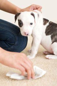 Manchas alfombras mascotas