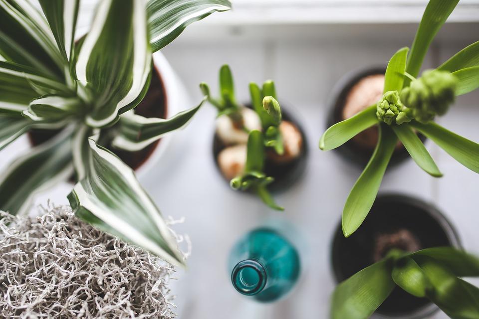 decora-plantas-casaymantel-decoracionrelajante-vista